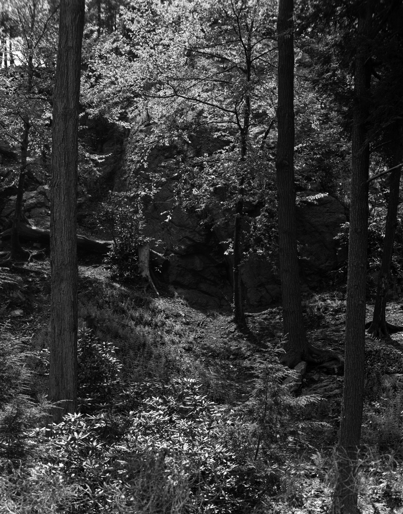wharting_Arboretum.jpg