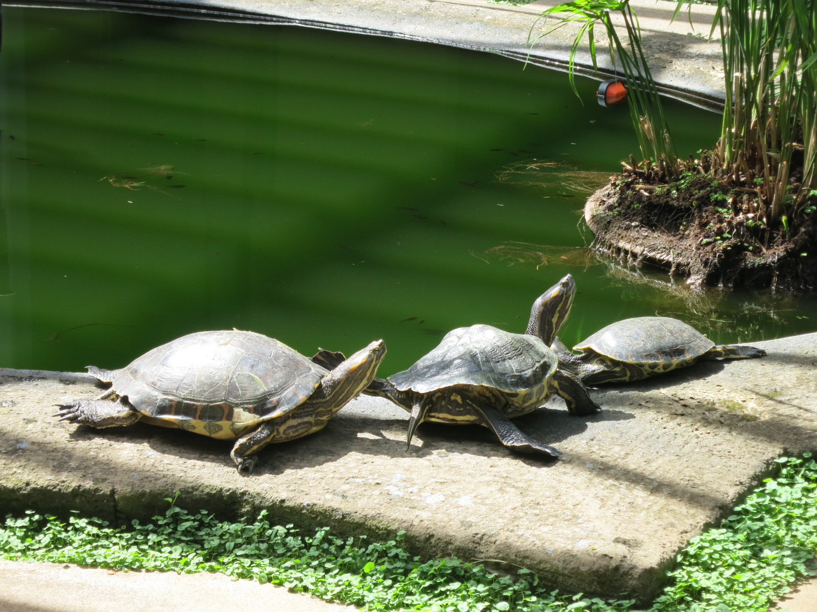 Real turtles that we watched forever