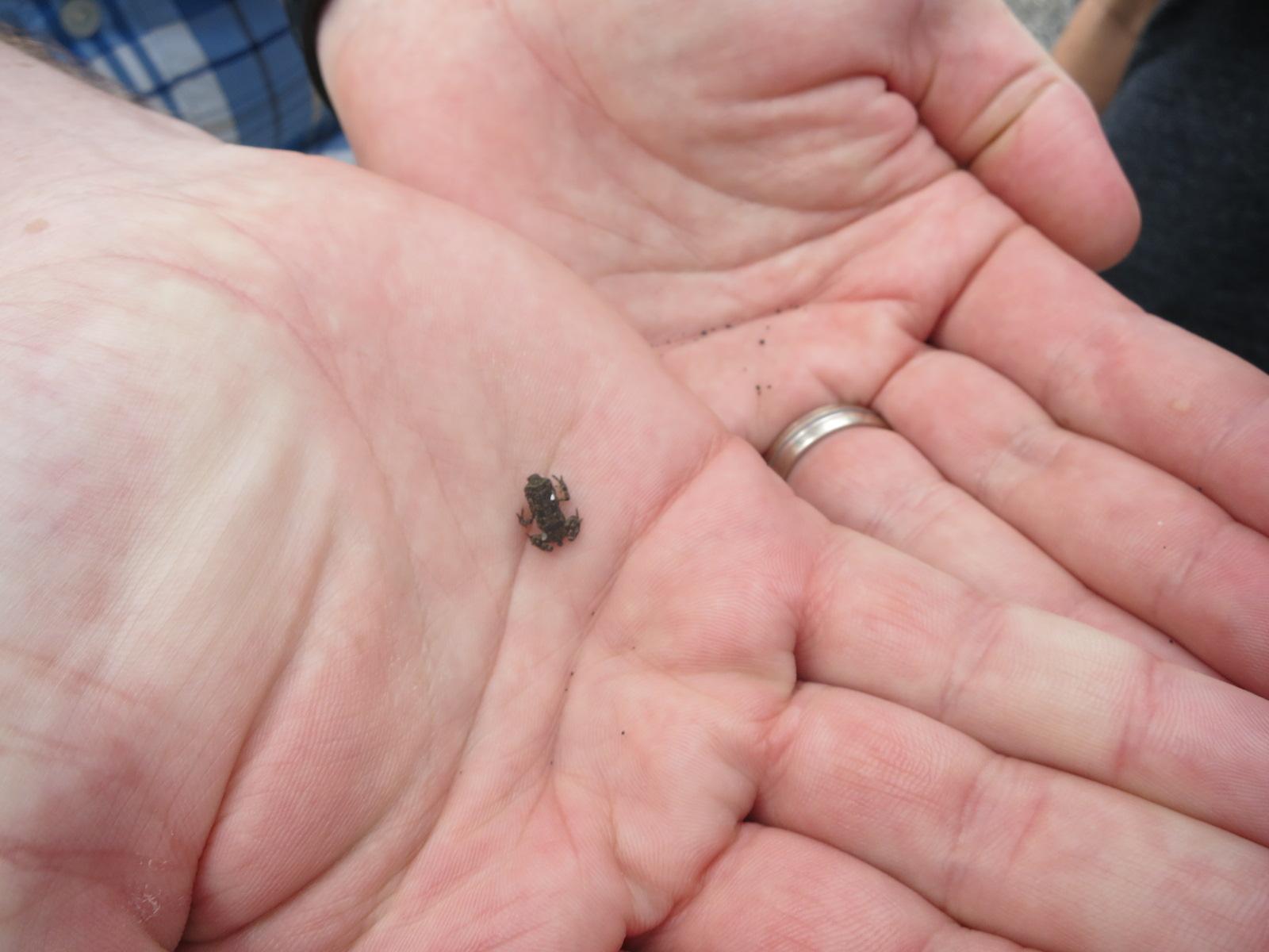 little frog!