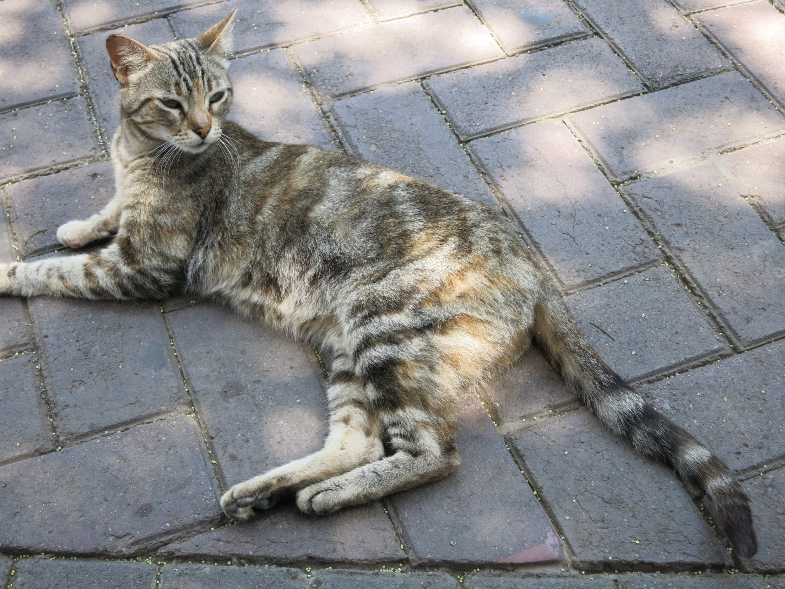 One of the many cats - this one reminded us of our cat Bailey