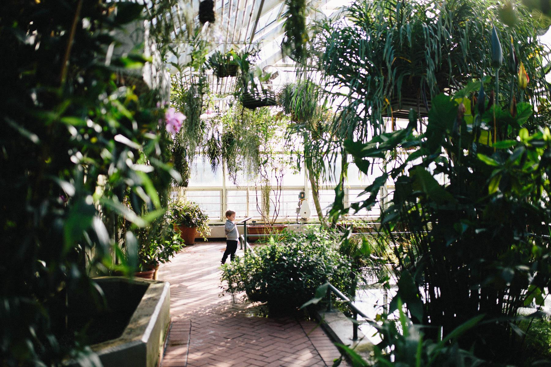 Everyday Adventure: Brooklyn Botanical Garden Conservatory