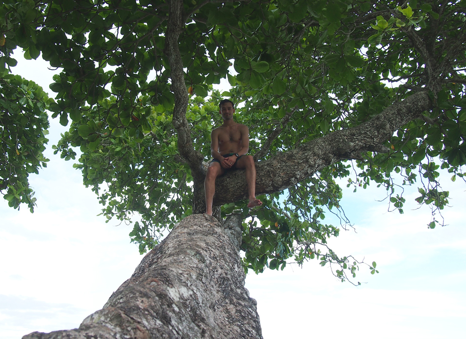 Tommy in a tree.jpg