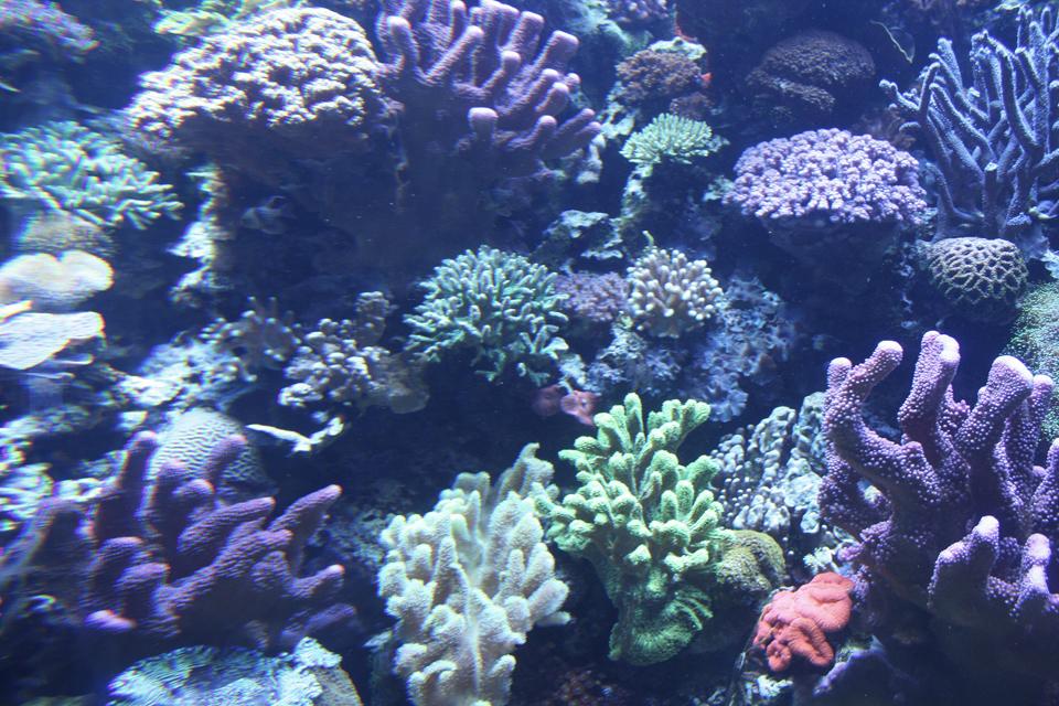 Aquarium7.jpg