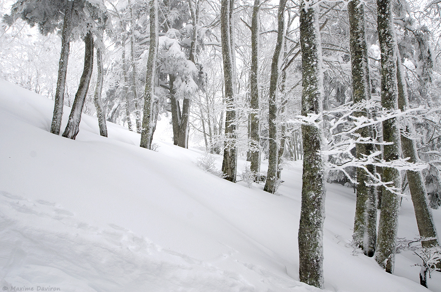neige 075.jpg