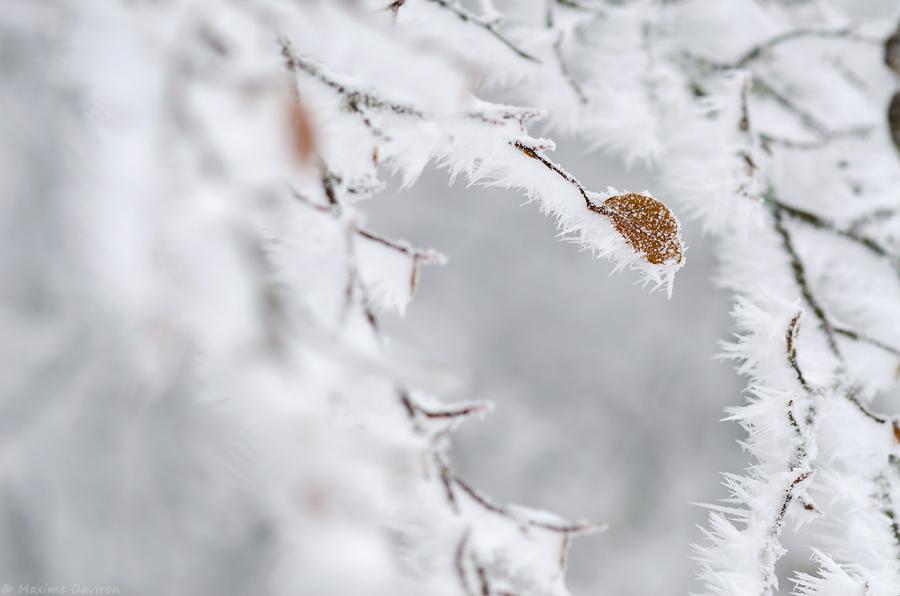 neige 174.jpg