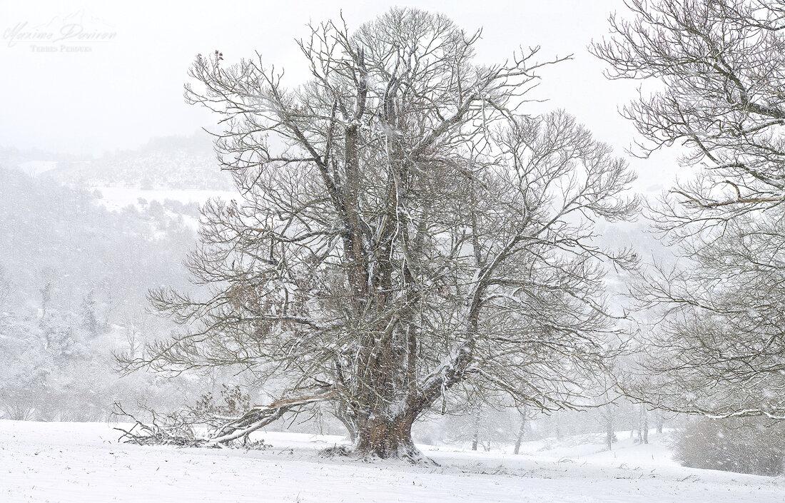 Ariège 090_stitch1B.jpg