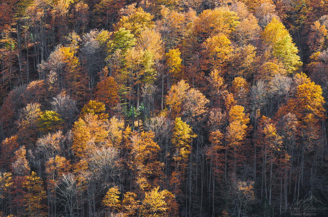 automne 151.jpg