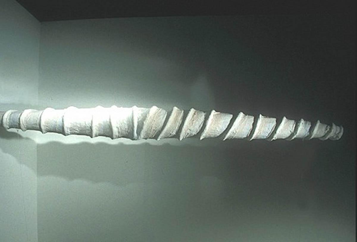 43b-Fairfield unicornhorn.jpg