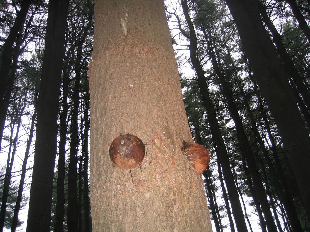 treebody 4.jpg