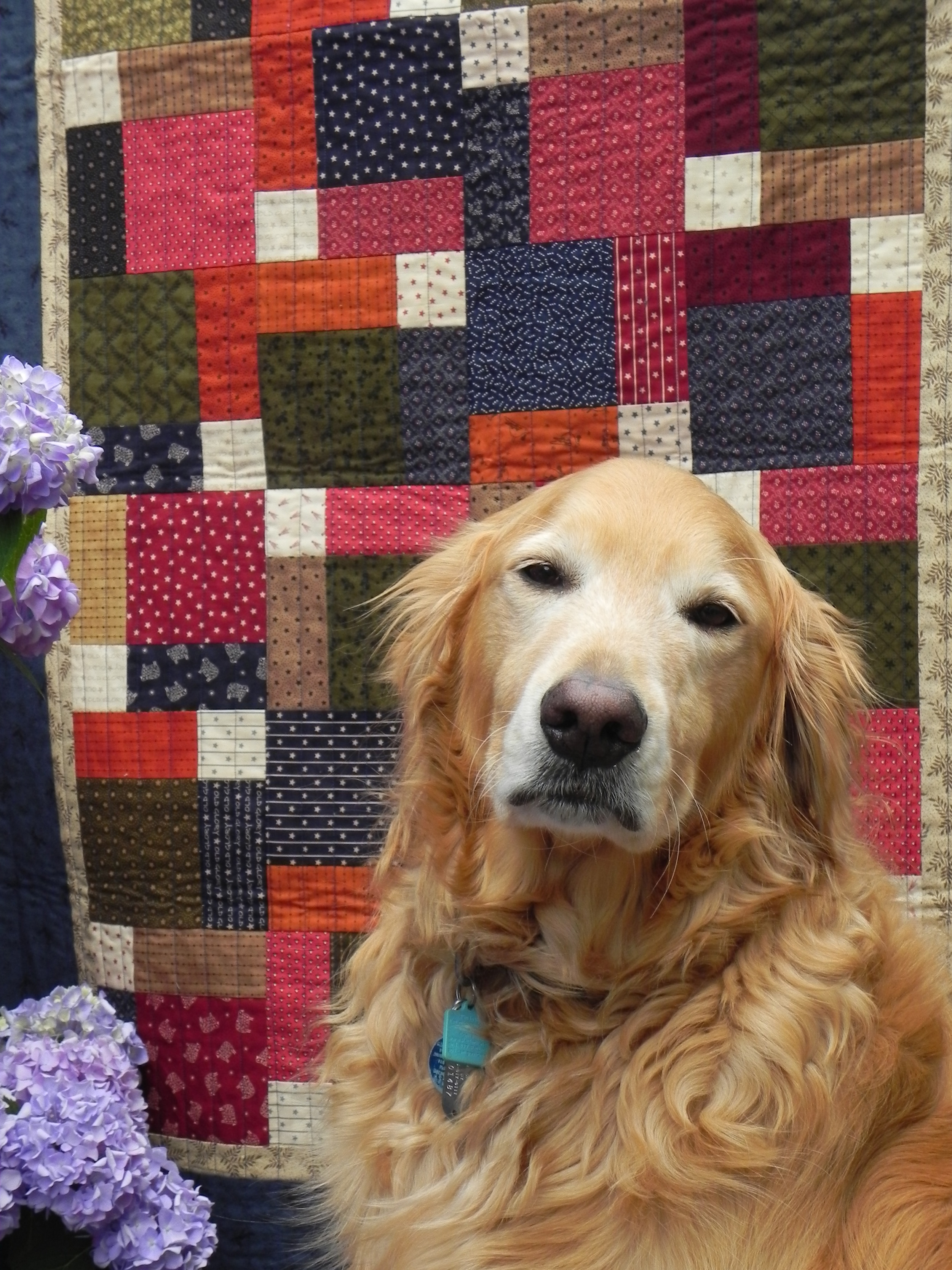 Dogs n' Quilts