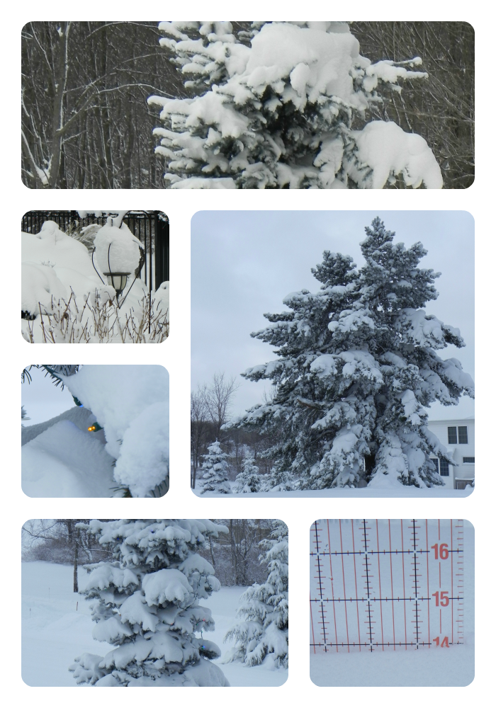 SnowstormJan2014collage.png