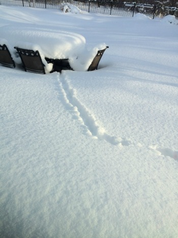 Some little critter got out walking in this snow--sure wasn't me!