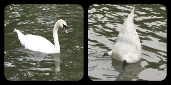 I can't ever resist, can I? This may be the birth of a #swanbutt series of quilts...