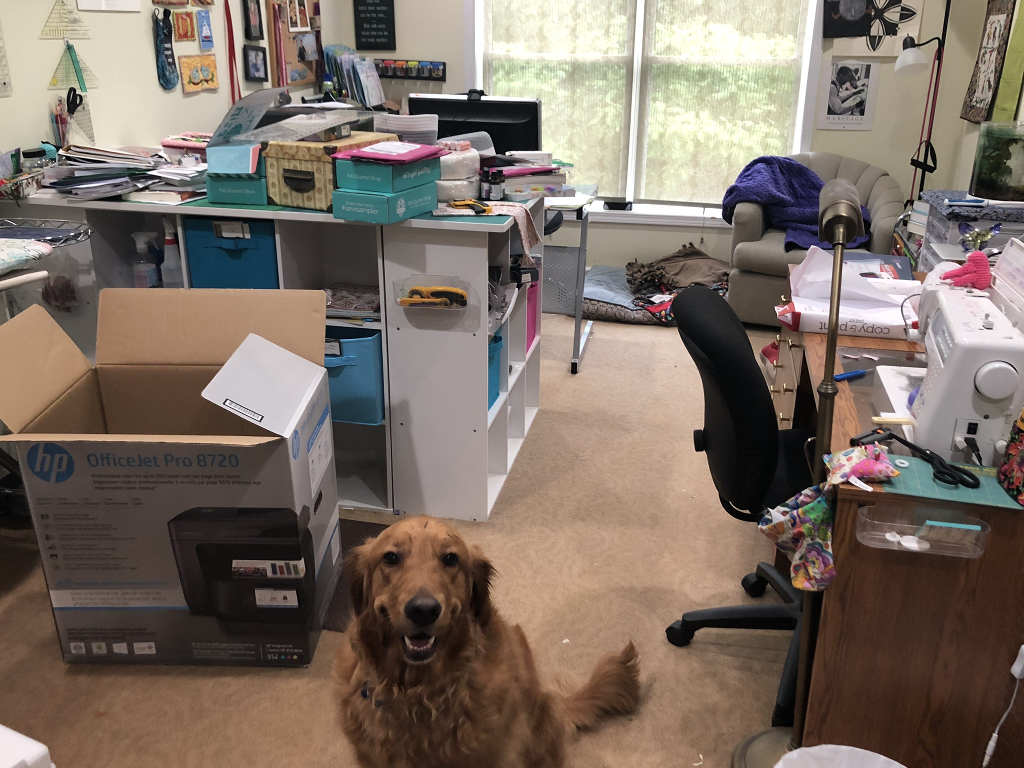 Auggie likes the idea of me settling into my office again.