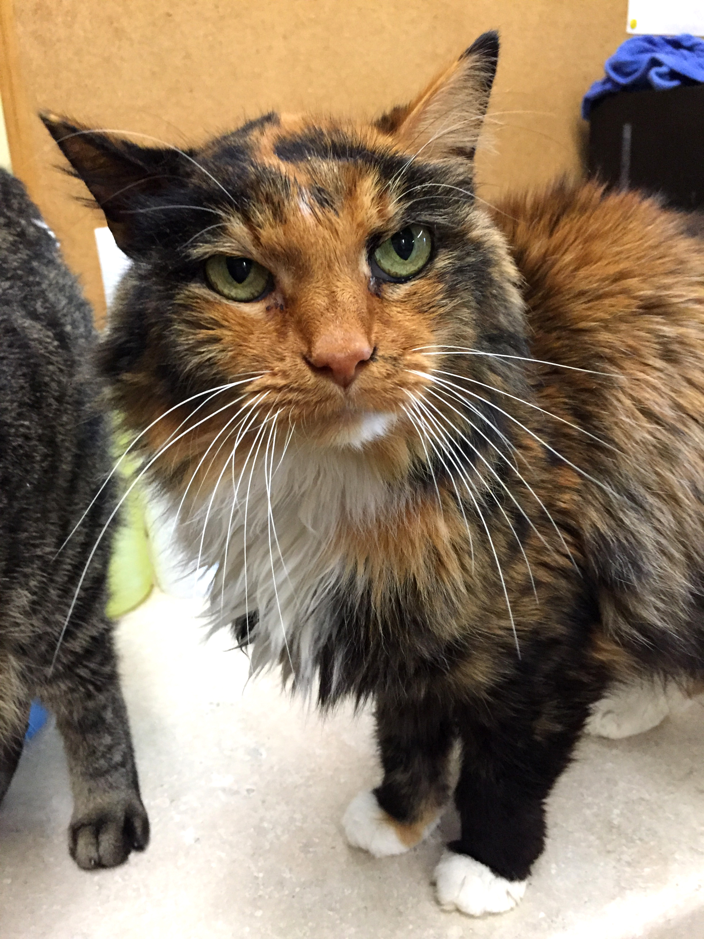 - Chloe was backed over by a car. She requires special medication to maintain her health due to a lazy bowel. Chloe is 12 years old.