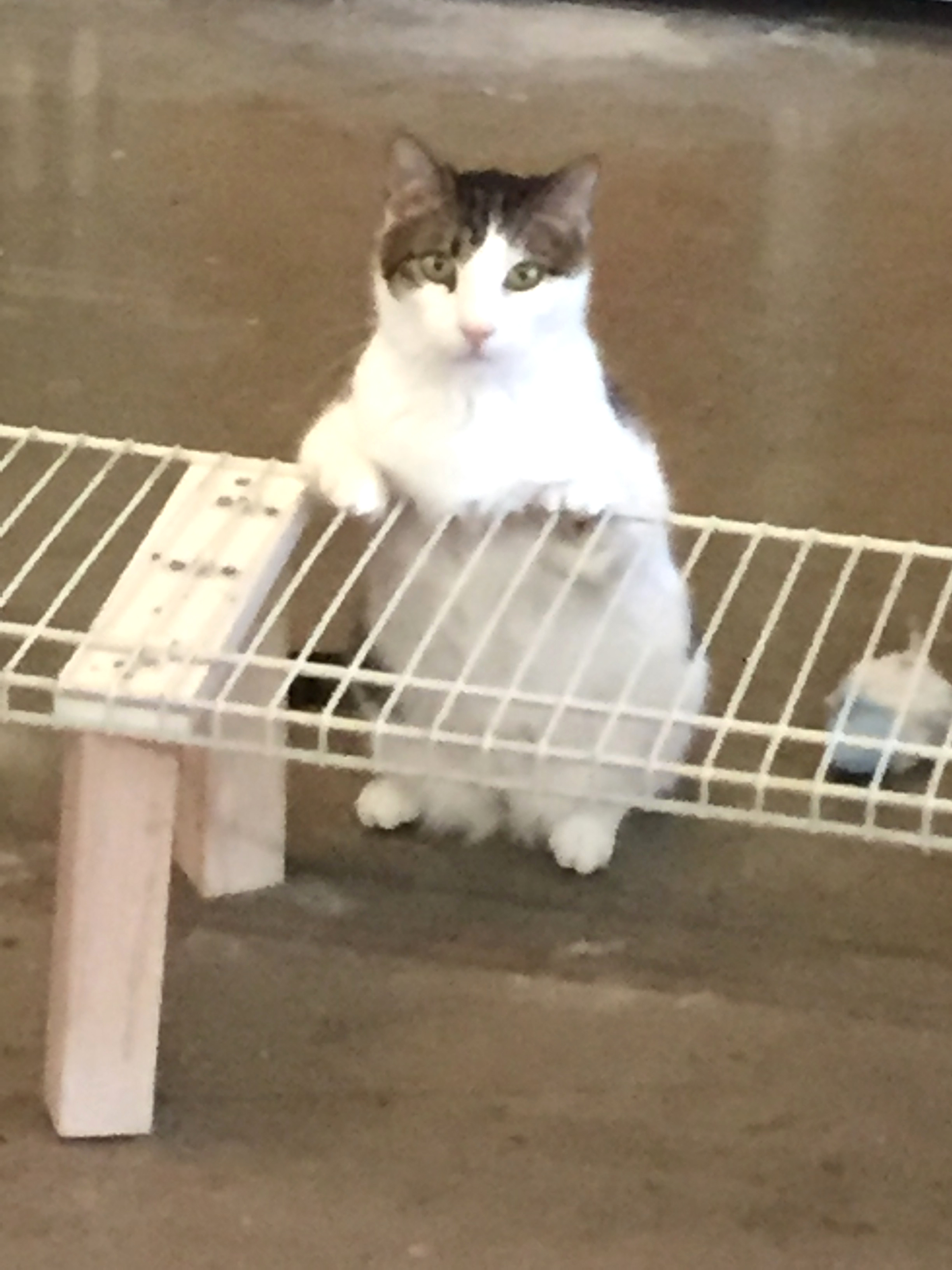 - Broderick has deformed front legs and paws. He is extremely shy requiring special handling.