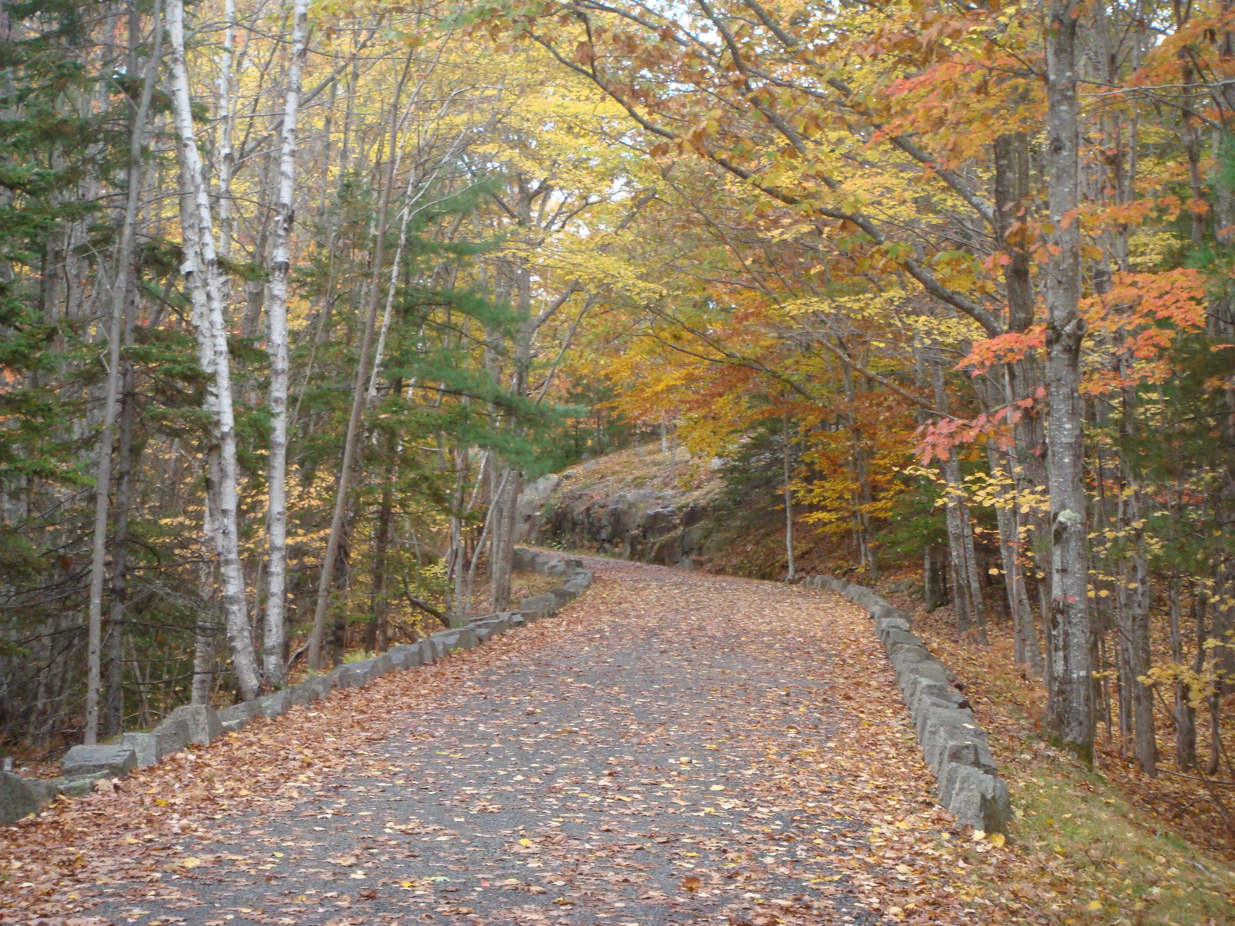 The carriage roads are wide and gently graded as they were originally developed to accommodate horse-drawn carriages.