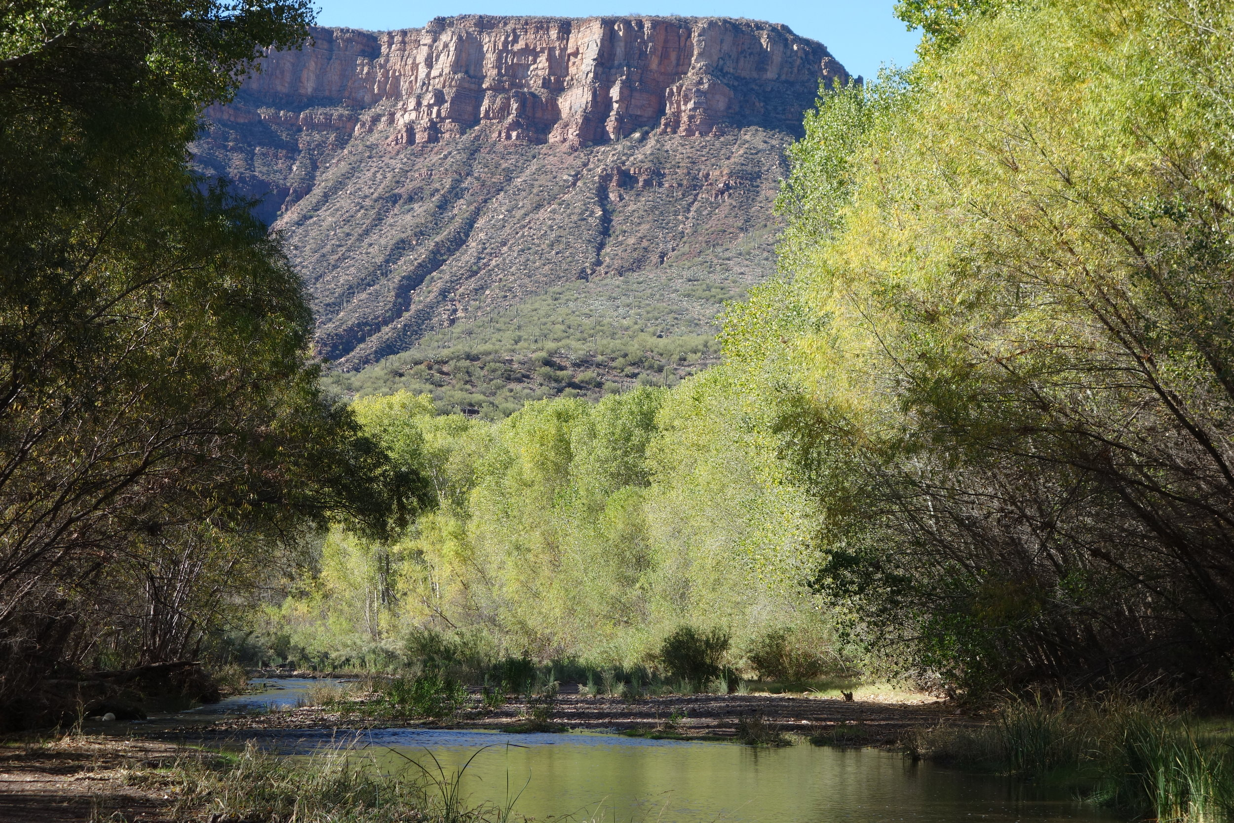 In the canyon, the creek is lined with mature cottonwood, sycamore, and willow trees, offering shade and shelter.