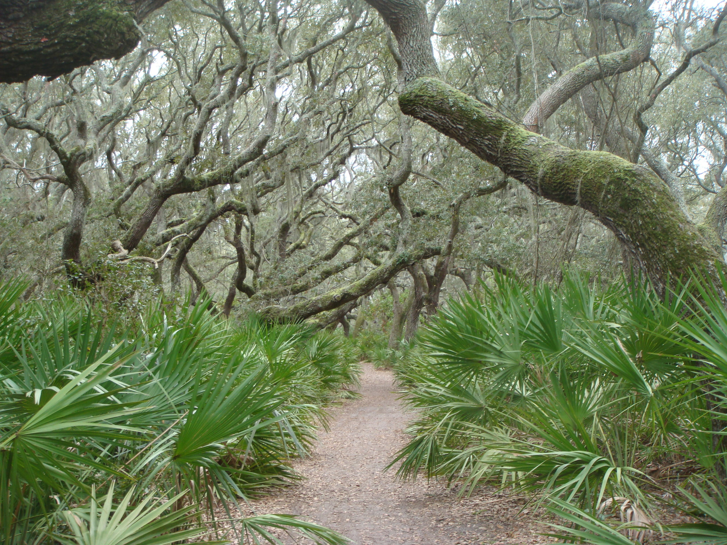 Cumberland Island includes 10,000 acres of wilderness offering many hiking opportunities.
