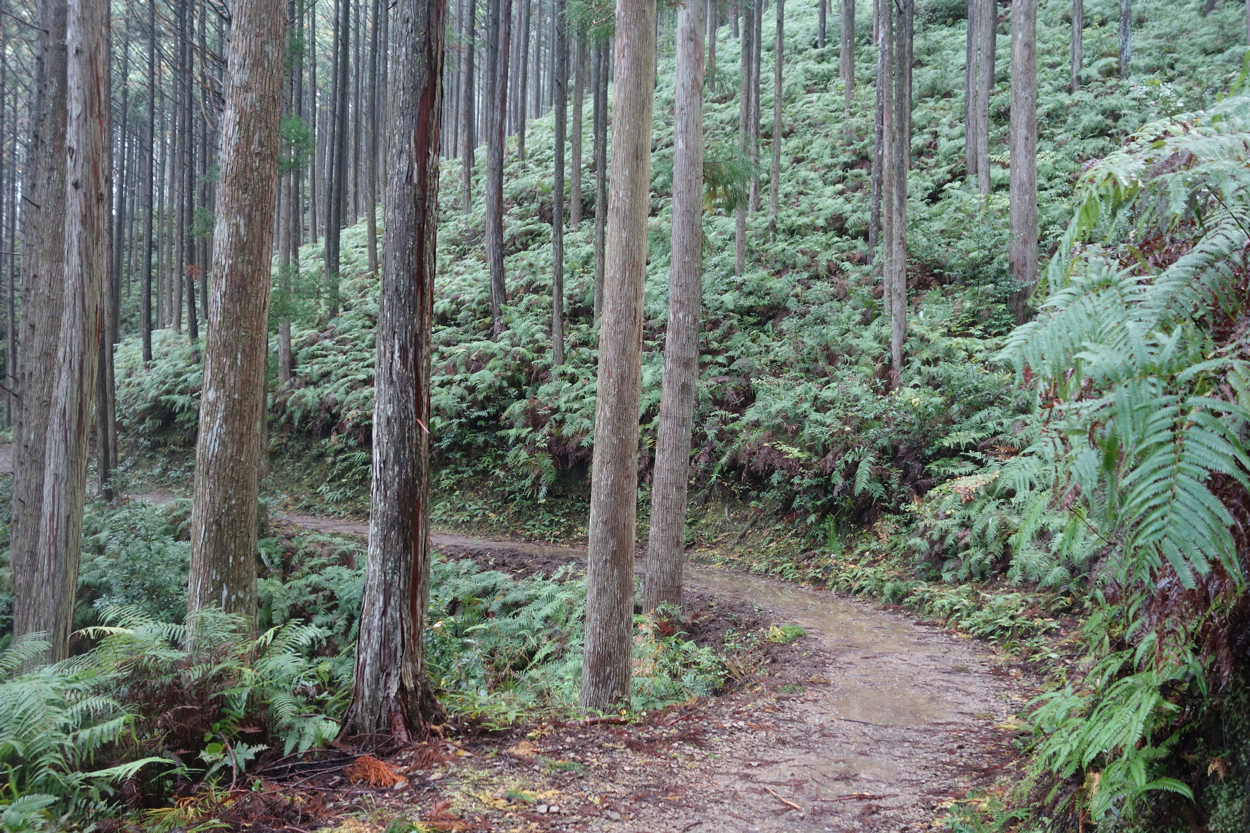 The Kumano Kodo is well-maintained, thanks to help from many volunteers.