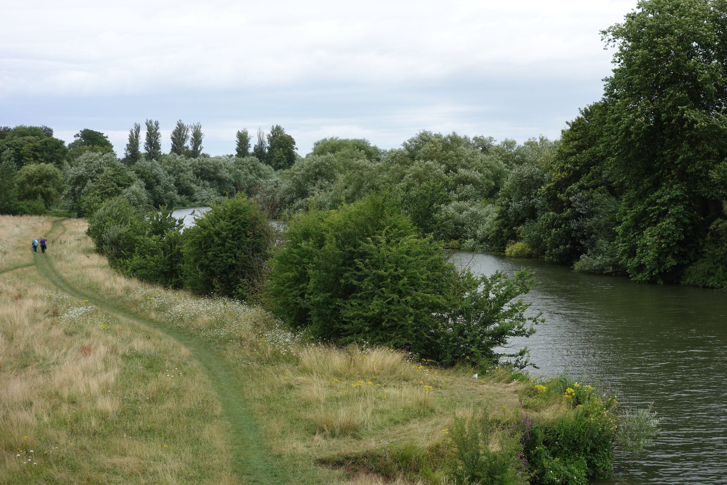 Much of the Thames Path skirts agricultural land hard on the river shore.