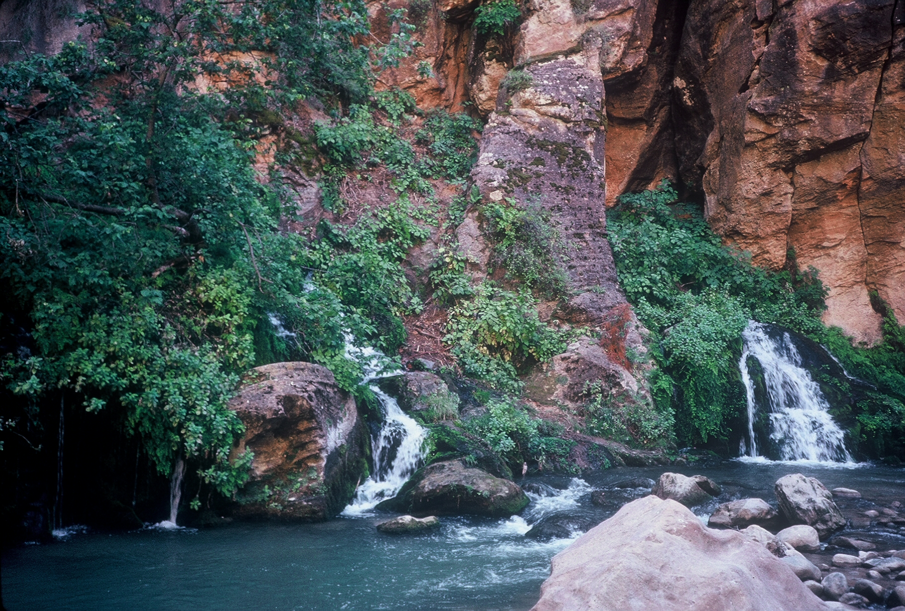 Springs, seeps, and small tributaries create pockets of lush vegetation deep in the Virgin River Narrows.