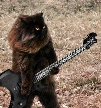 viking-metal-cat.jpg
