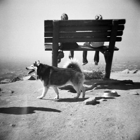 runyon canyon bench photograph - hollywood, california