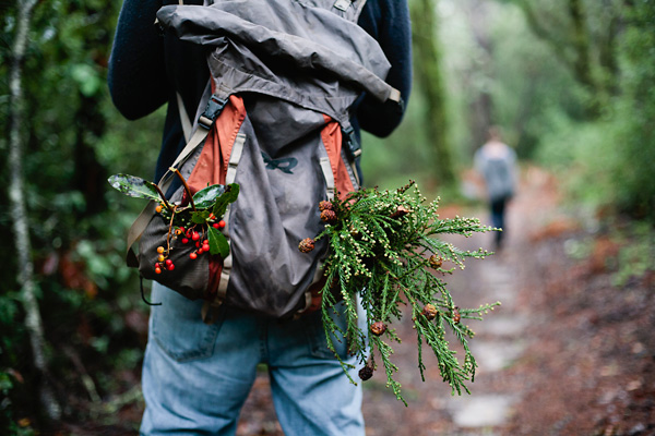 Santa Cruz, CA Redwood Forest - Hiking Photograph