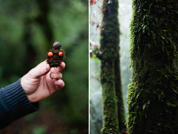 Santa Cruz, CA Redwood Forest