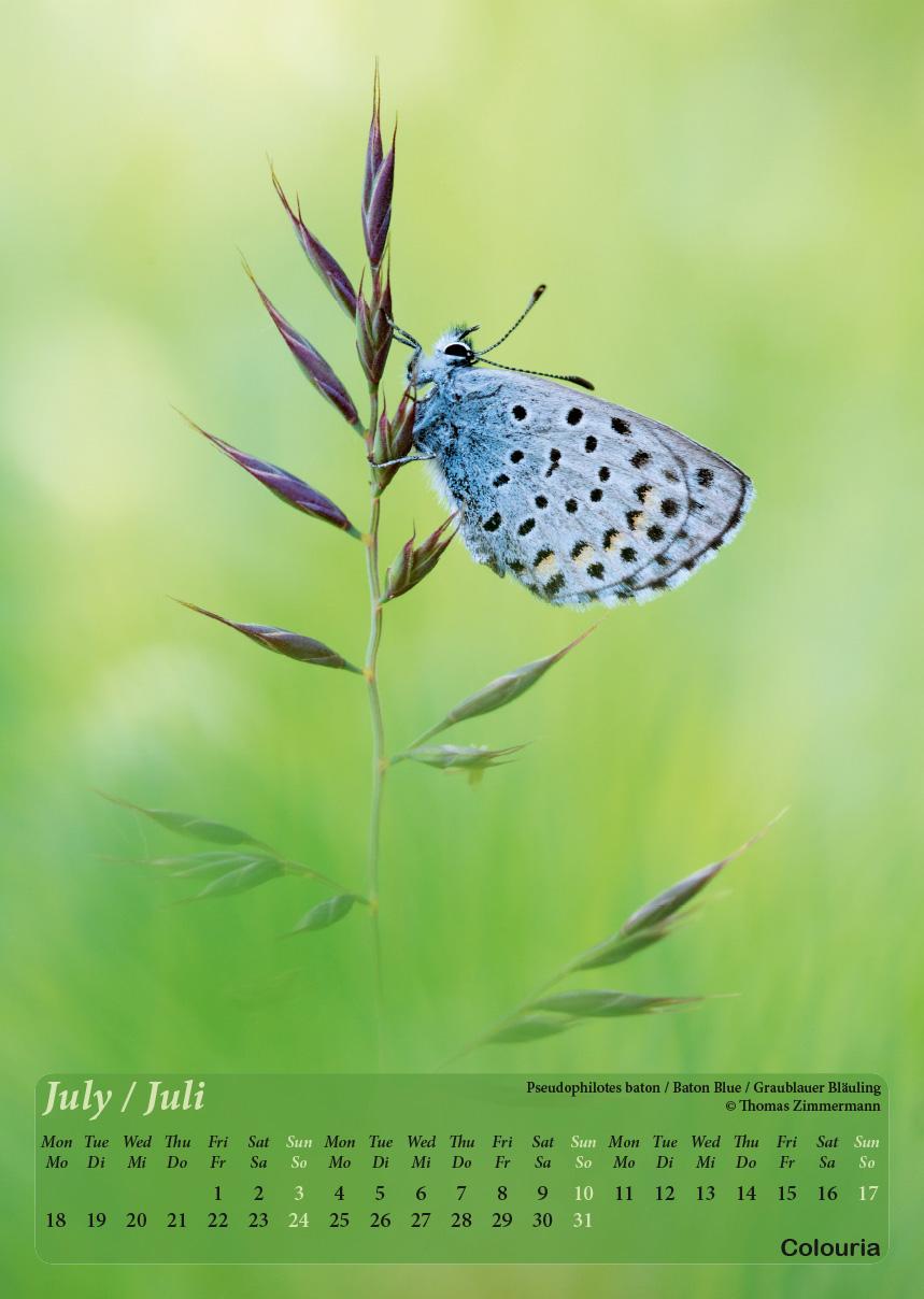 Dauth2_Schmetterlinge_2016_korrigiert_mod-8.jpg