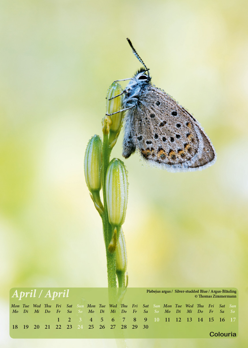 Dauth2_Schmetterlinge_2016_korrigiert_mod-5.jpg