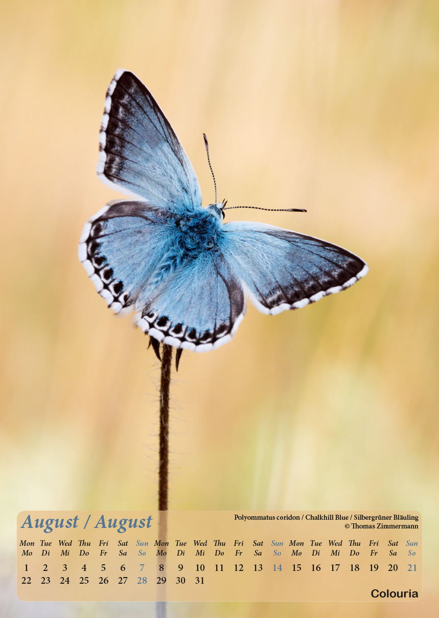 Dauth2_Schmetterlinge_2016_korrigiert_mod-9.jpg