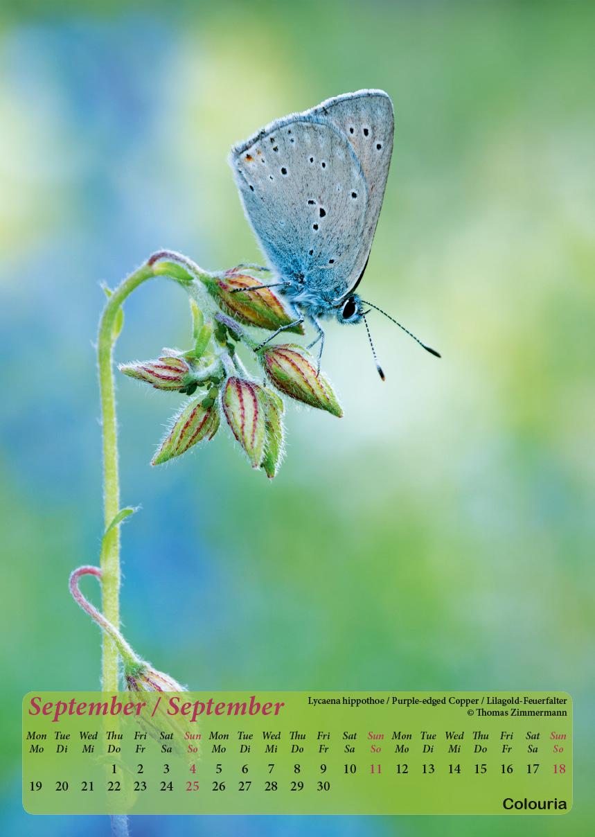 Dauth2_Schmetterlinge_2016_korrigiert_mod-10.jpg