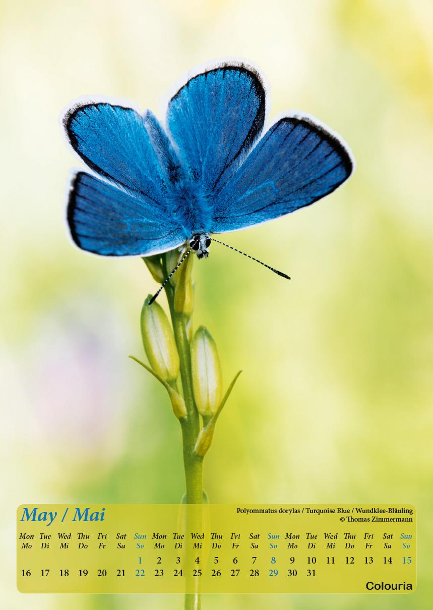 Dauth2_Schmetterlinge_2016_korrigiert_mod-6.jpg
