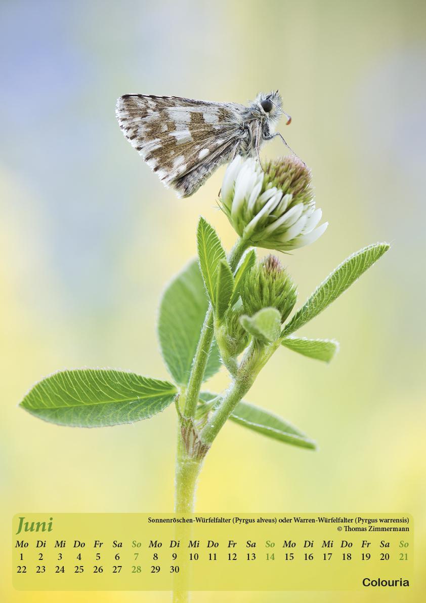 Dauth_Schmetterlinge_2015_korrigiert7.jpg