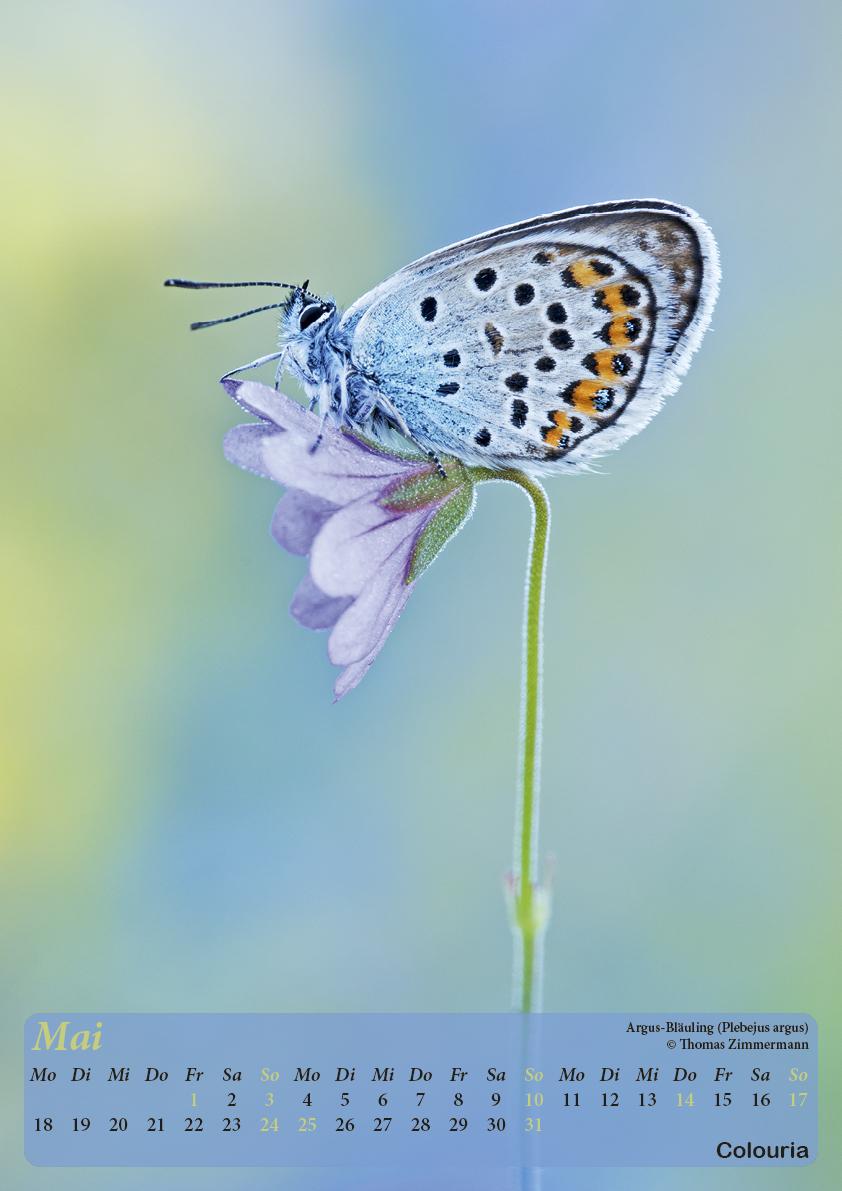 Dauth_Schmetterlinge_2015_korrigiert6.jpg
