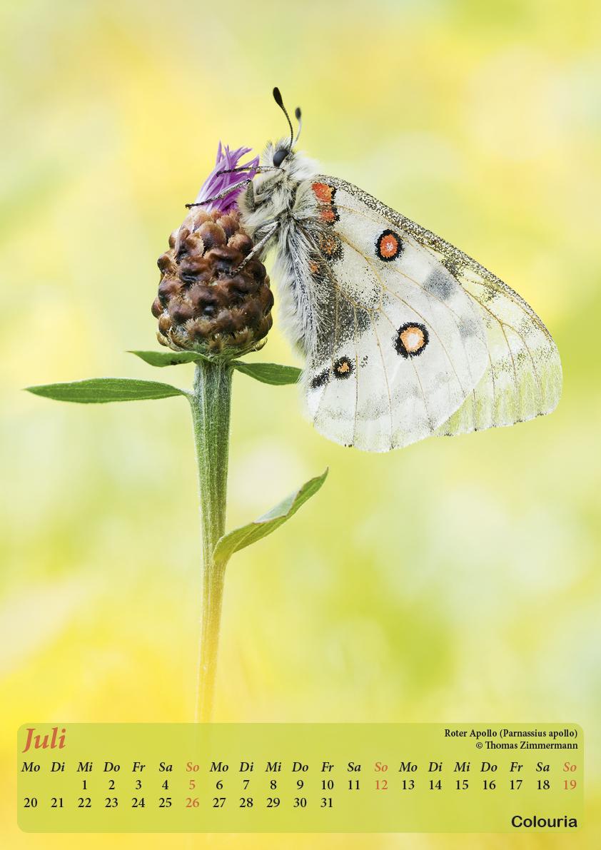 Dauth_Schmetterlinge_2015_korrigiert8.jpg