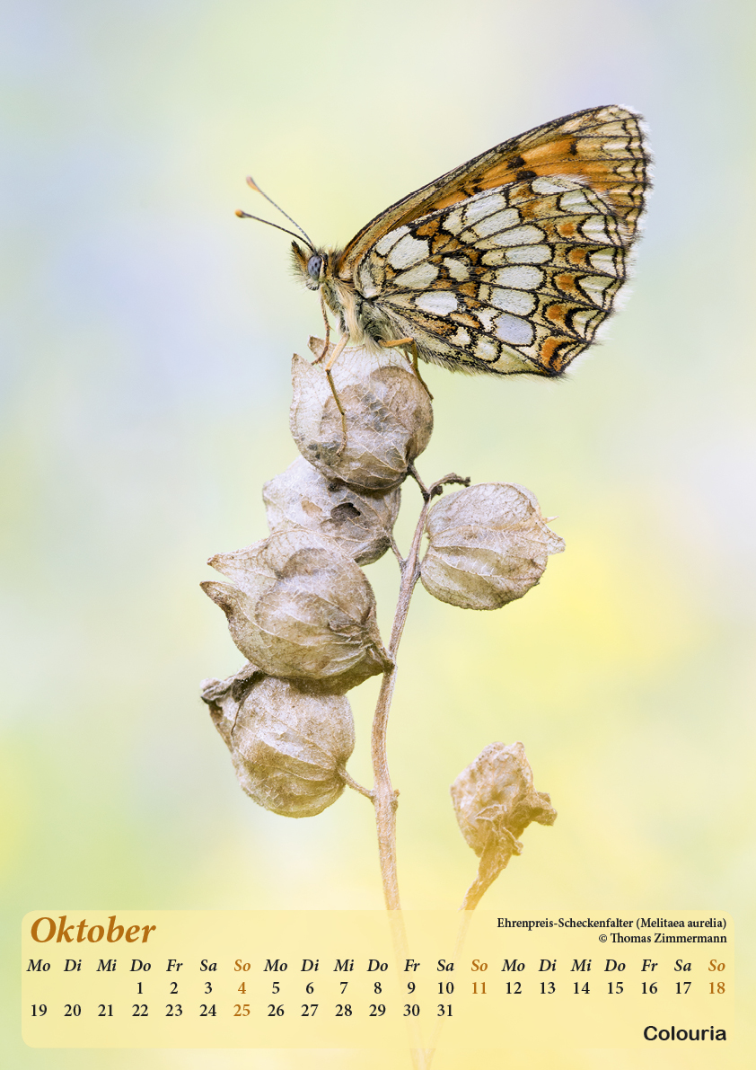 Dauth_Schmetterlinge_2015_korrigiert11.jpg