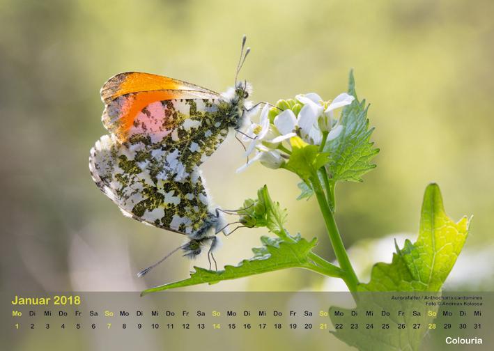 Schmetterlinge_2018_OK_6cm_sRGB_Jan.jpg