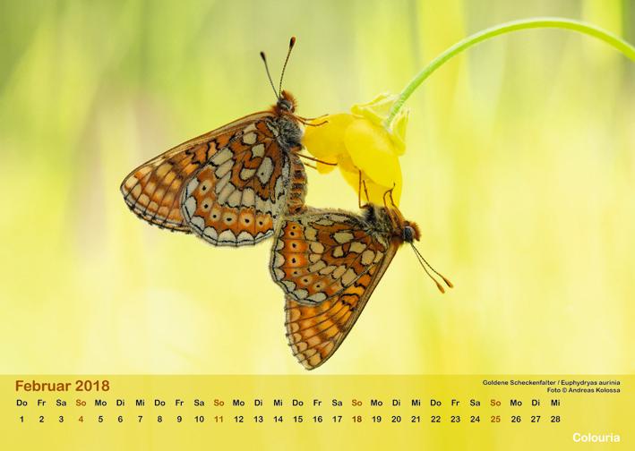 Schmetterlinge_2018_OK_6cm_sRGB_Feb.jpg