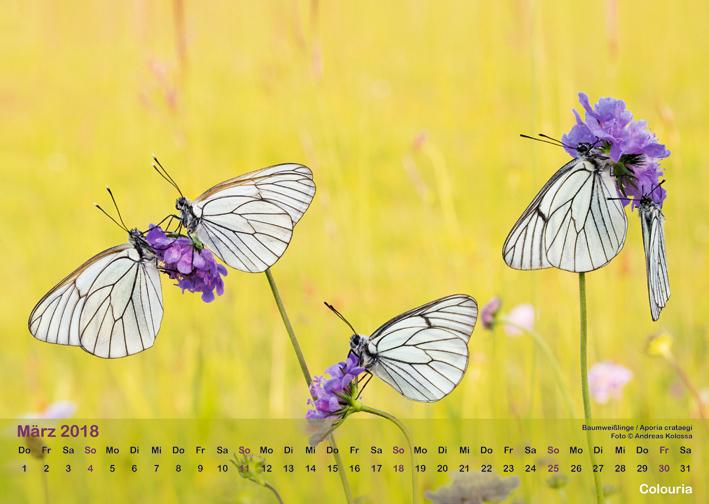 Schmetterlinge_2018_OK_6cm_sRGB_Mae.jpg