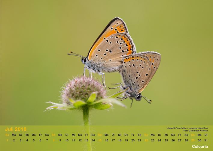 Schmetterlinge_2018_OK_6cm_sRGB_Jul.jpg