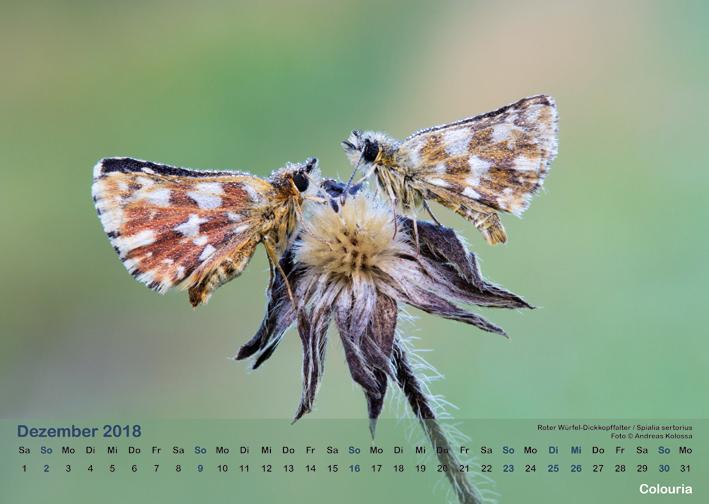 Schmetterlinge_2018_OK_6cm_sRGB_Dez.jpg