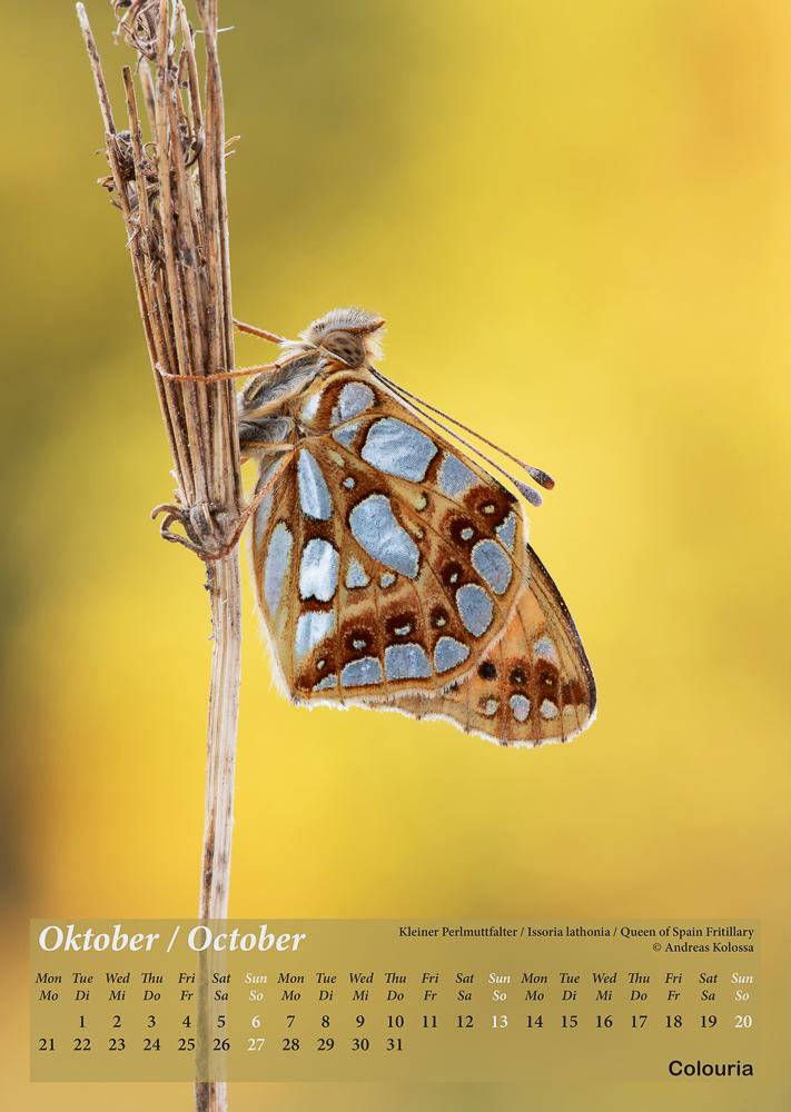 Schmetterlinge_2019_Colouria_8.10.201811.jpg