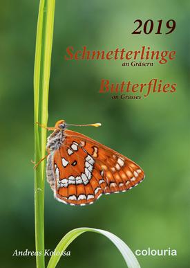 Schmetterlinge_2019_275px_Colouria_8.10.2018.jpg