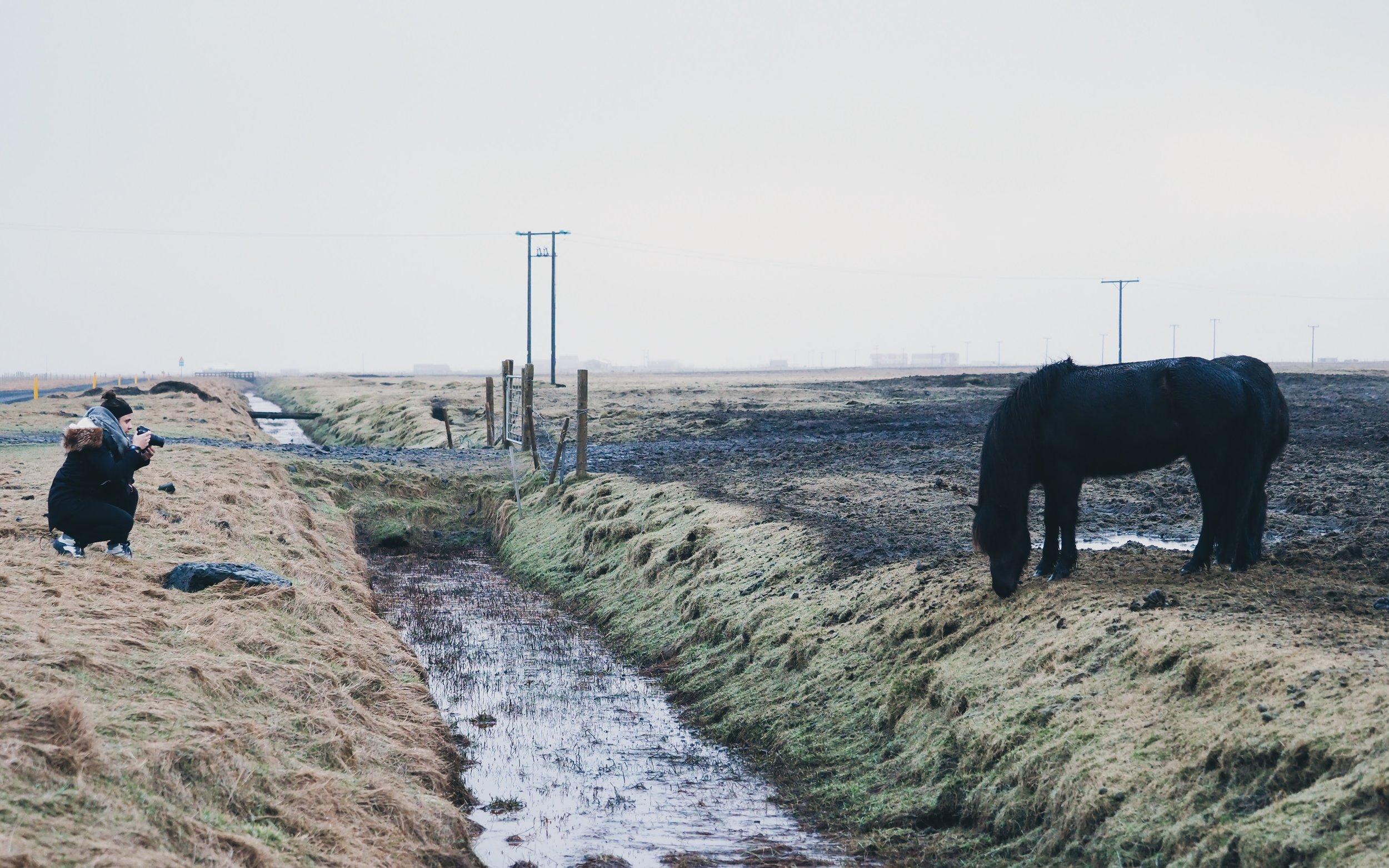 Taken in Rangarvallasysla, Iceland on February 19.