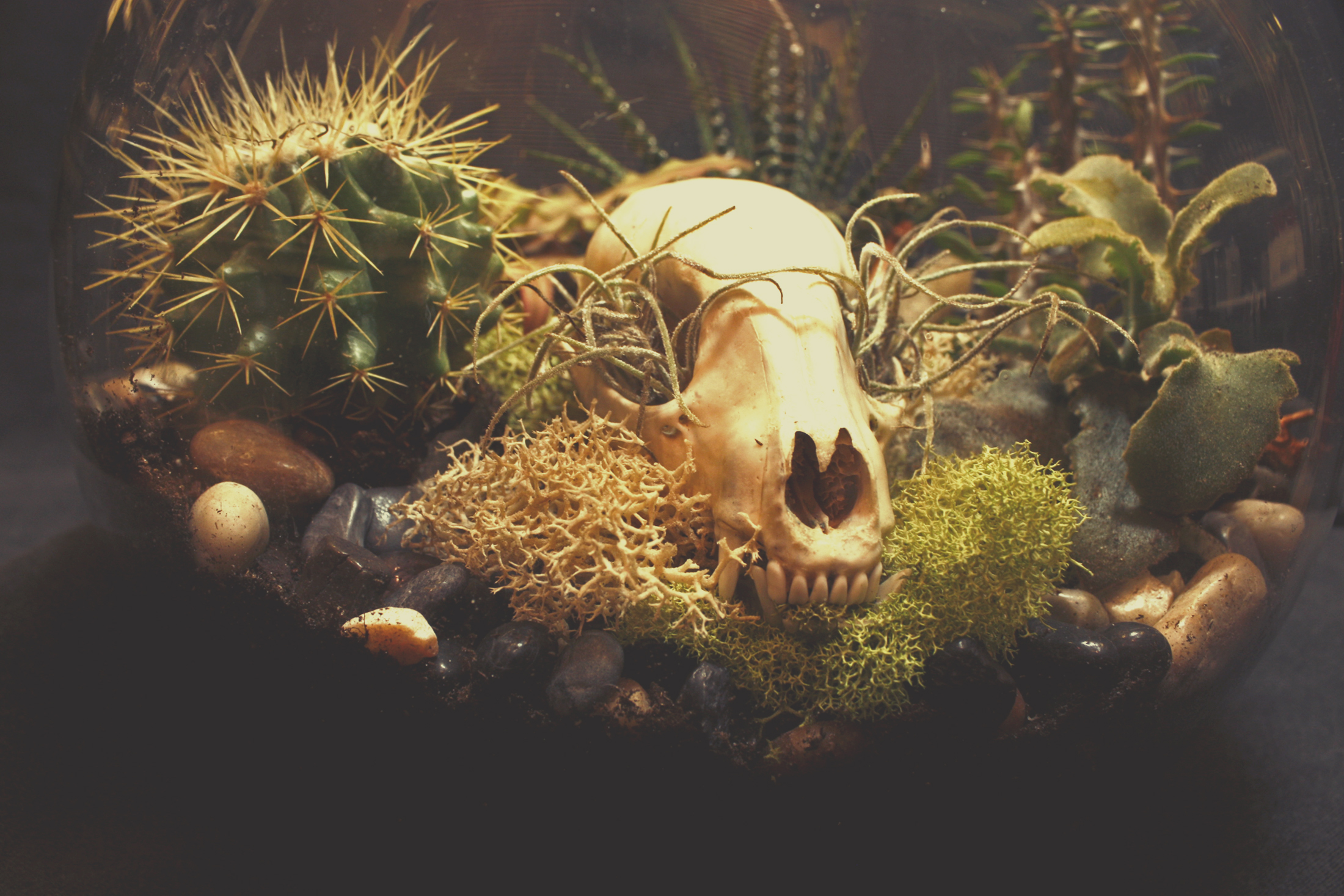 Custom Raccoon Skull Succulent Terrarium with Quartz Crystal, created for Nick Wagner, a great guy and an amazing tattoo artist at Black Hive Tattoo .