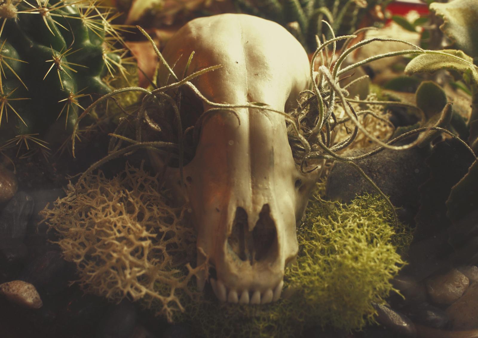 Custom Raccoon Skull Succulent Terrarium with Quartz Crystal