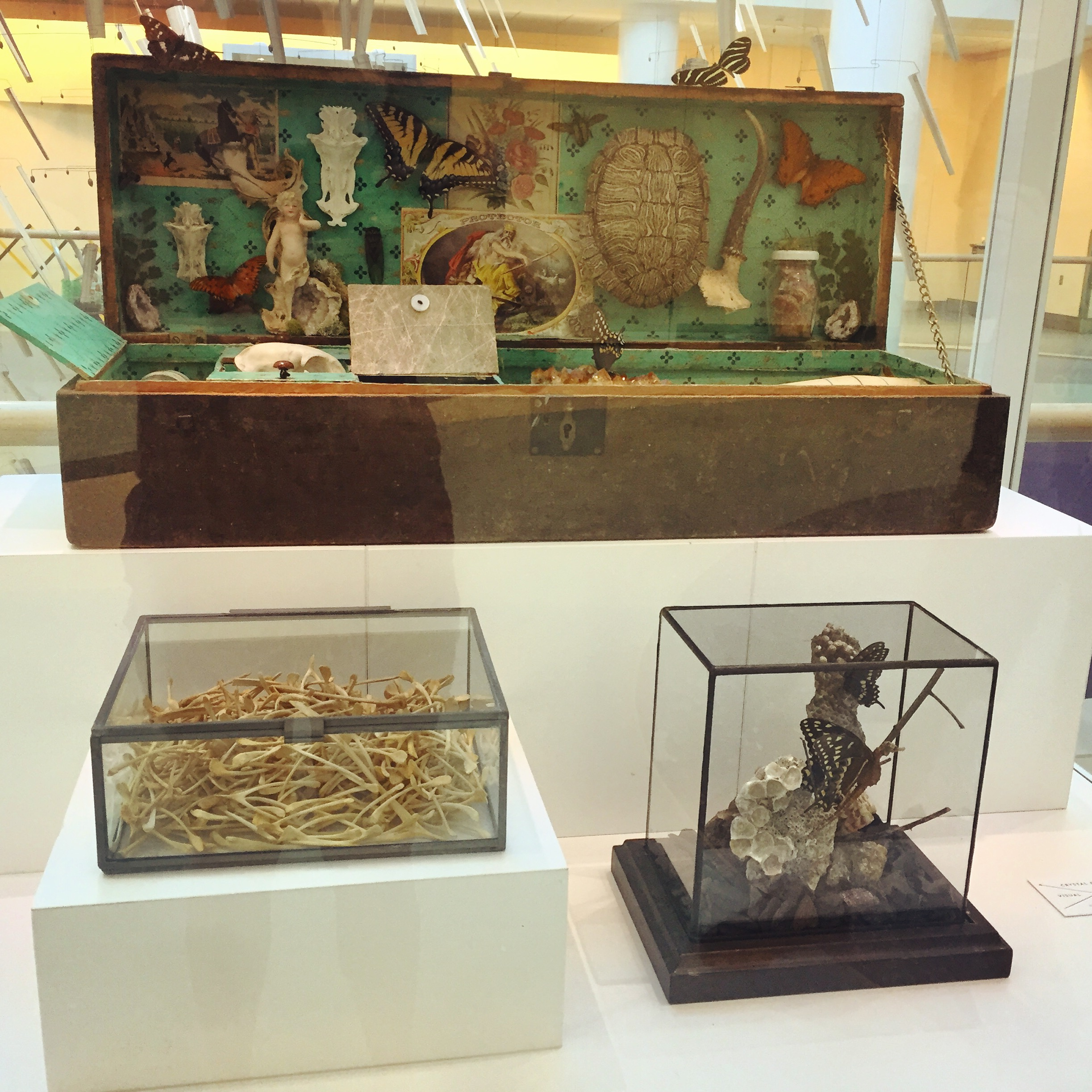 Exhibition at the Concourse Gallery Cases at the Jacksonville International Airport, July - December 2016.